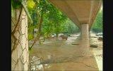 Gürcistan'da Yaşanan Sel Felaketi ve Vahşi Hayvanlar