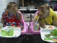 İnsanlıktan Nasibini Alan Maymunlar