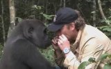 5 Yıl Sonra Sahibini Gören Goril