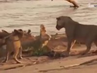 Hayvanlardan İnsanlık Dersleri