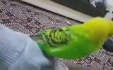 Şehitler Ölmez Vatan Bölünmez Diyen Muhabbet Kuşu