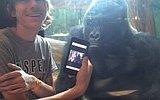 Telefondaki Fotoğrafları Gördükçe İçerlenen Goril