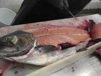 Hipnoz Etkili Balık Temizleme