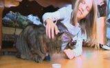 USA'dan Fransa 'ya Kaçan Kedi Emily'nin Eve Dönmesi 2005