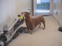 Köpeklerin Evde Sıkılmamasını Sağlayan Muhteşem İcat