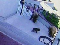 Küçük Köpeğin Üç Ayıyı Kovalaması