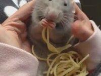 Zevkle Spaghettiyi Hüpleten Sıçan