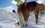 Snowboard Yaparken Kara Saplanmış Halde Gördüğü Atı Kurtaran İyi İnsan