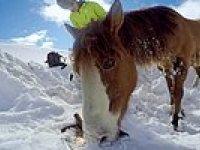 Snowboard Yaparken Kara Saplanmış Halde Gördüğü Atı Kurtaran İyi İnsan!