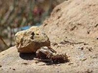 Ölü Kuşu Saatler İçinde Yok Eden Karıncalar - Time Lapse