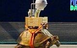 Dünyanın En Yavaş Rube Goldberg Makinesi