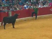 Boğa Güreşlerinde Unutulmayacak  Bir Boğa Matador Güreşi