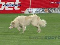 Maç Sırasında Sahaya Köpek Girmesi!