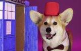 'Doctor Who'nun 52 Yılında Değişen 13 Doktoru Taklit Eden Köpek