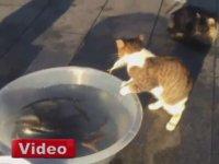 Yakaladığı Balığı Kaptıran Mazlum Kedi