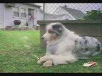 Efsane Efkarlı Köpek