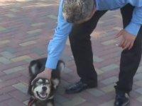 Belediye Başkanının Köpek Saldırısına Uğraması