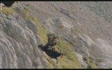 Vahşi Kartalın Dağ Keçisine Gözünü Dikmesi