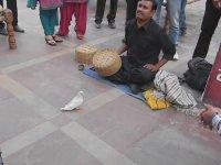 Hindistan Sokak Sihirbazlığı (Yumurtalı)
