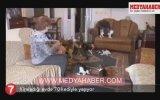 Kiraladığı Evde 70 Kediyle Yaşamak