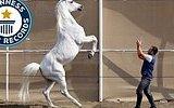 İki Ayağı Üzerinde 10 Metre Giden At