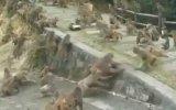 Aç Kalan Maymunların Birbirlerini Yemeye Kalkması