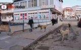 Köpeği Fırlatıp Dereye Atan Yaratık  Erzurum/Oltu