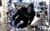 Uluslararası Uzay İstasyonu'nda Goril Şakası Yapmak