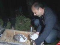 Şüpheli Paketten Tavşan Çıkması - Bursa