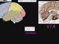 Şizofreninin Biyolojik Temeli