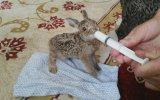 Şırıngayla Tavşan Beslemek