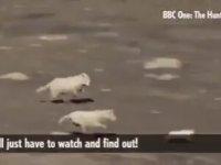 Hızlı ve Tavşan