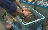 Balon Balığı Fugu Fish Lokantası