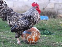 Futbol Sihirbazı - Horozoviç