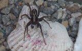 Her Yer Örümcek  Böcek Reis