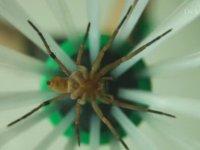 Örümcek Yakalama Aleti