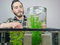 Balıklarınız İçin Akvaryumunuzda Ekstra Alan Yaratmak İster misiniz?
