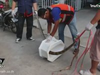 Tuvalette Piton Saldırısı - Tayland
