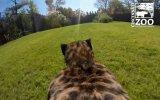 GoPro ile Çitanın Gözünden Görmek