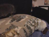 Köpek Görünümlü Tilki Asriel