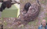 Balkondan Kedi Belgeseli Çeken Dayı  Dram İçerir