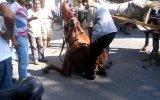 Büyükada'da Atlara Eziyet