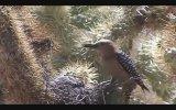 Zombi Ağaçkakanın Güvercin Beyni Ziyafeti Şerefsiz Kuşlar Serisi  1