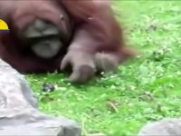 Hayvanların Kurtardığı Hayvanlar
