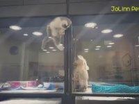 En Yakın Dostu İçin Kafes Duvarlarını Tırmanan Kedi