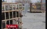 İstanbul'da AVM Bahçesinde Ayı Ve Aslan Bulunması