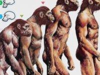 Körelmiş Organlar - Evrim Teorisi