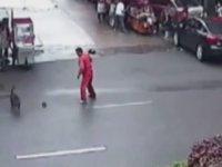 20 Kişiyi Isırarak Seri Katil İlan Edilen Köpek