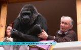 Devasa Gorille 18 Yıldır Aynı Evi Paylaşan Çift