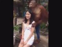 Kıza Ağır Yürüyen Orangutan